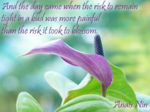 Anais Nin - Blossom - Purple
